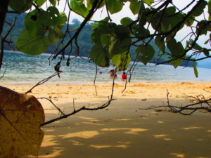 Melihat air laut dari balik pohon