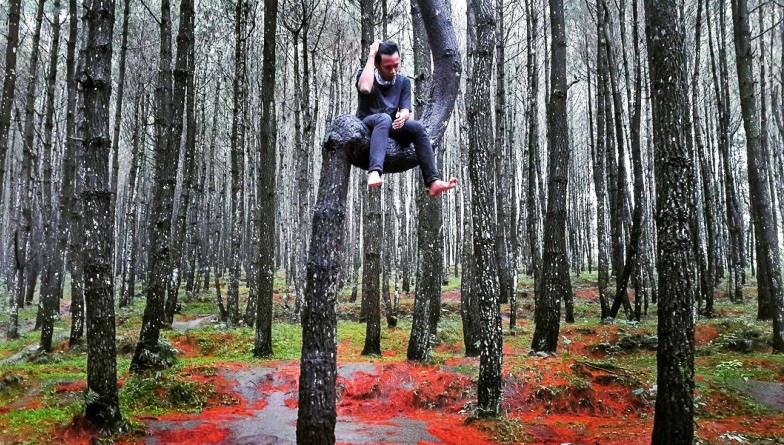 Hutan Pinus Kayon semarang wisata alam