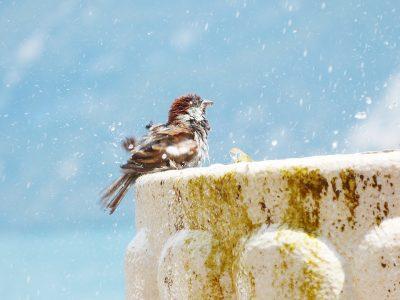 burung mandi dengan air bersih