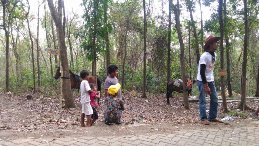 Bermain kuda di tempat wisata pohon akar lamongan