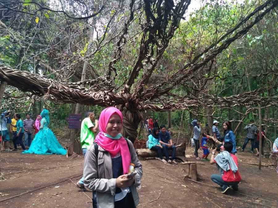 Pohon Trinil ( Pohon Akar Raksasa)